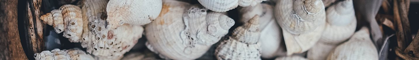 Sea Shells Selection